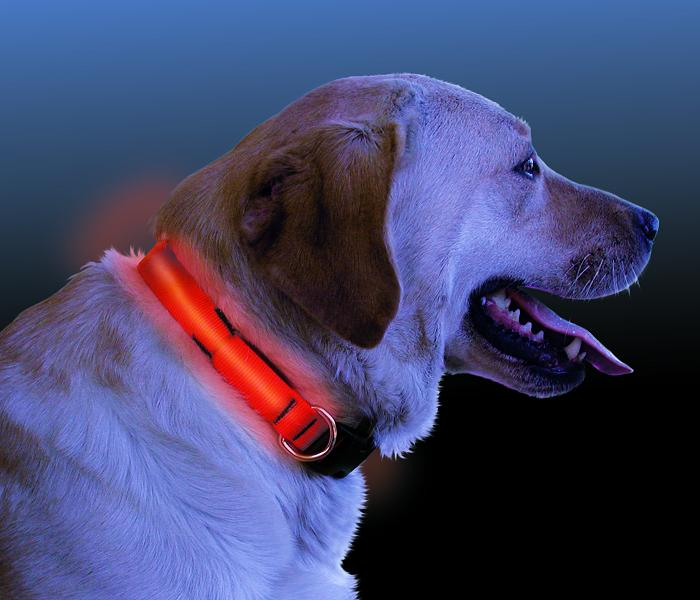 Nite Ize Nite-Dawg L.E.D. Dog Collar (Small)