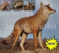 Lone Howler Coyote Decoy