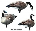 Renzo's Decoys Canada Geese 6 Pack Decoys
